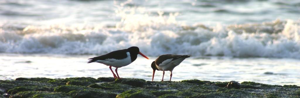 Slider vogels bij zee