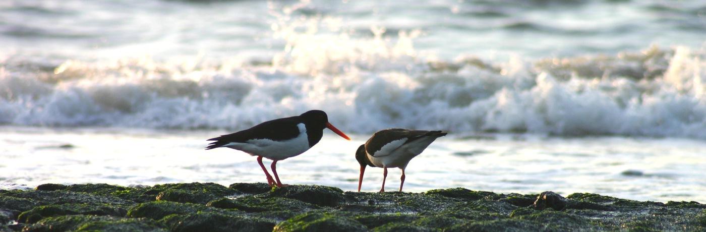 Milieu en natuur: zorg voor de schepping